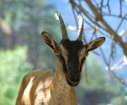 animals in Crete