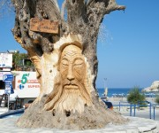 olive tree with a face in Crete